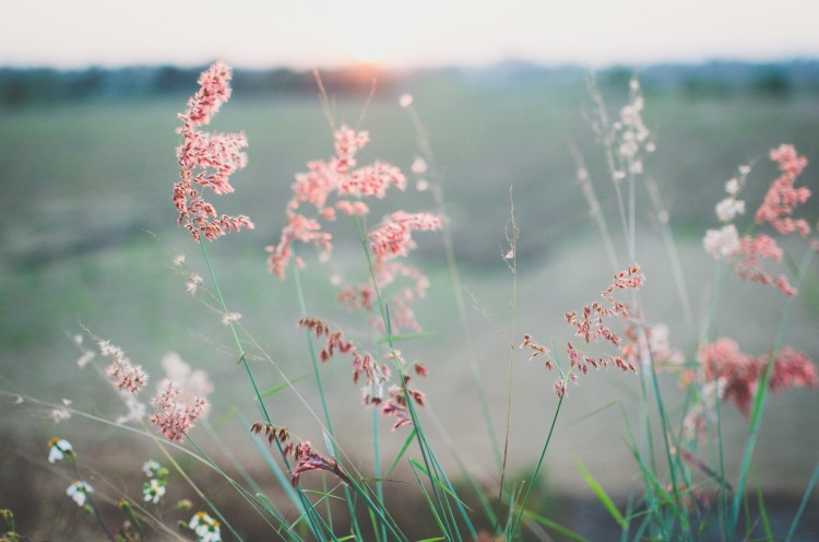 flowers-690425_1920