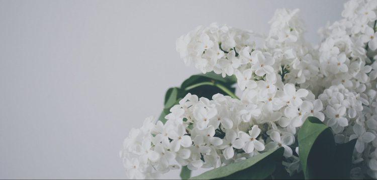 plant-768503_1920